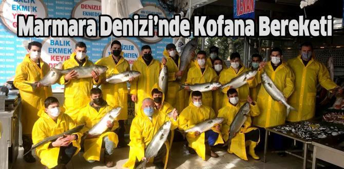 Marmara'da kofana bolluğu: Kilosu 300 liradan 70 liraya düştü