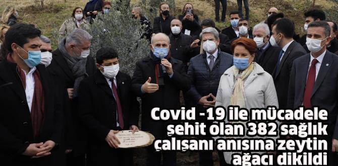 Covid -19 ile mücadele şehit olan 382 sağlık çalışanı anısına zeytin ağacı dikildi